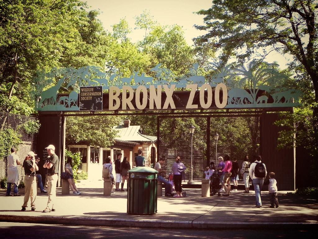 zoo du bronx