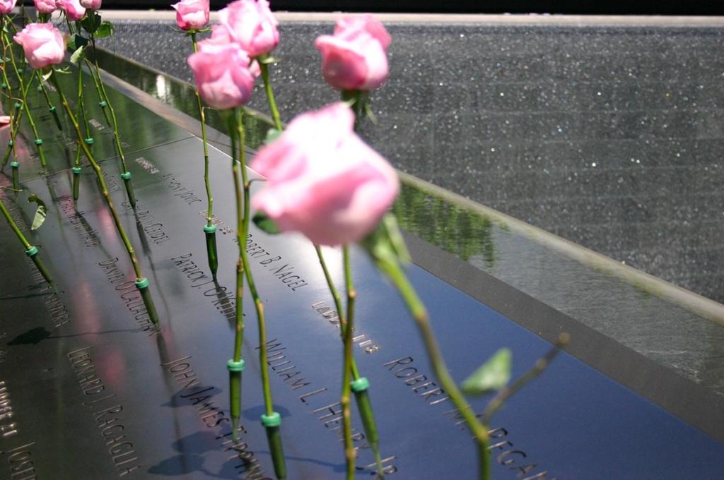 Roses autour des bassins du World Trade Center | Memorial du 11 Septembre New York