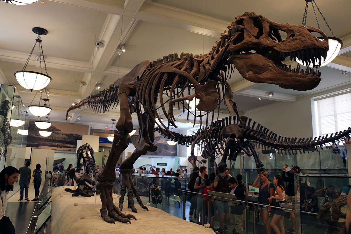 Dinosaure du Musée d'Histoire Naturelle de New York