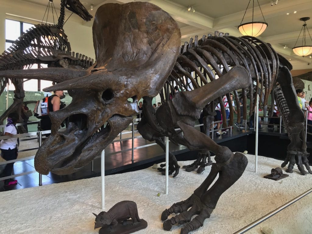 Squelette d'un dinosaure au musée d'histoire naturelle de New York.