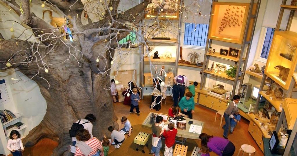 Vue d'en haut de la salle des découvertes du musée d'histoire naturelle de New York.