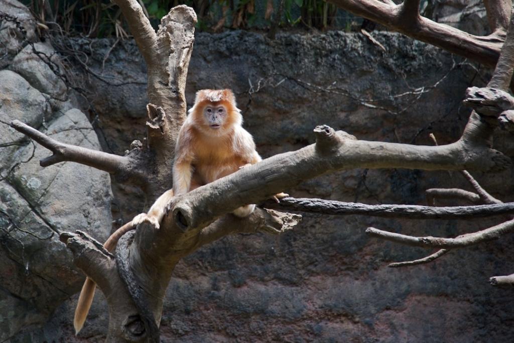 Singe au zoo du Bronx à New York